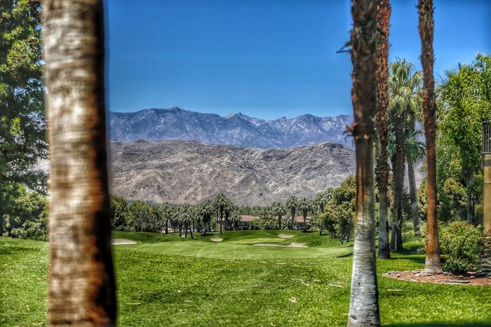 A perfect day in Palm Desert Mountains Golf Golf Course JGLowe Plant Tree Grass Sky Nature Green Color Day No People Tree Trunk Trunk Environment Outdoors Beauty In Nature Landscape Blue Sport Growth Mountain Scenics - Nature
