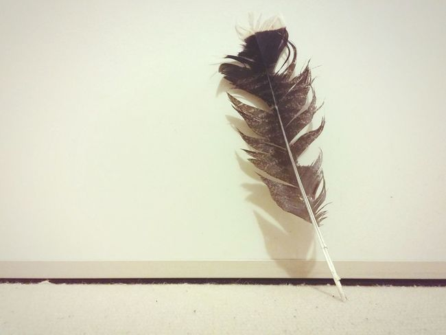 Feather_perfection Solitude First Eyeem Photo