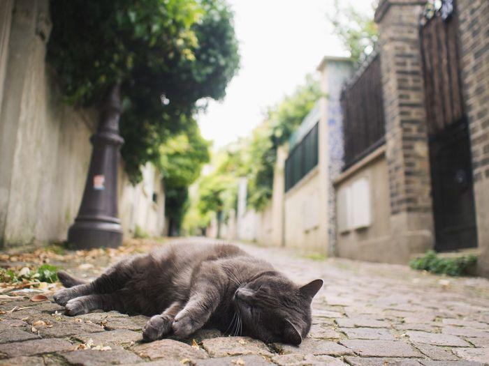 The Street Photographer - 2016 EyeEm Awards Eye4photography  Streetphotography Paris Cat