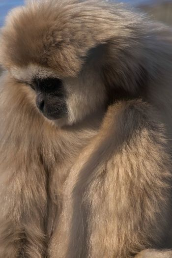A beautiful creature resting between playtime with her two very energetic sons. Animal Themes One Animal Mammal Close-up No People Animals In The Wild Nature Day Monkey Outdoors Baboon