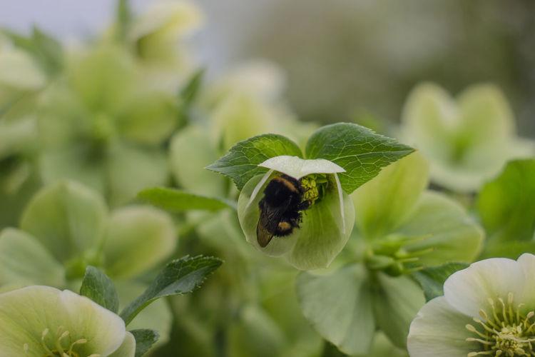 Fowers Bee
