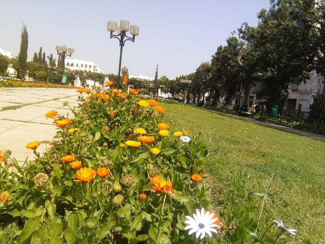 Place Public Enjoying The Sun Picnic Eyeem Tunisia Relaxing Flowers