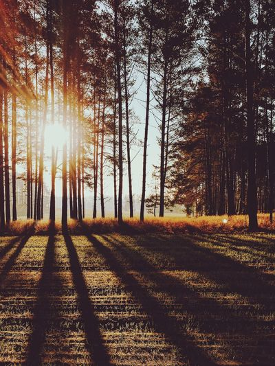 Morning Tree Plant Sunlight Nature Tranquility Beauty In Nature Land Day Sunbeam Forest Scenics - Nature Tranquil Scene No People The Great Outdoors - 2019 EyeEm Awards