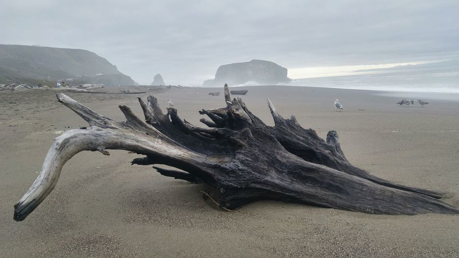 Driftwood at beach against cloudy sky
