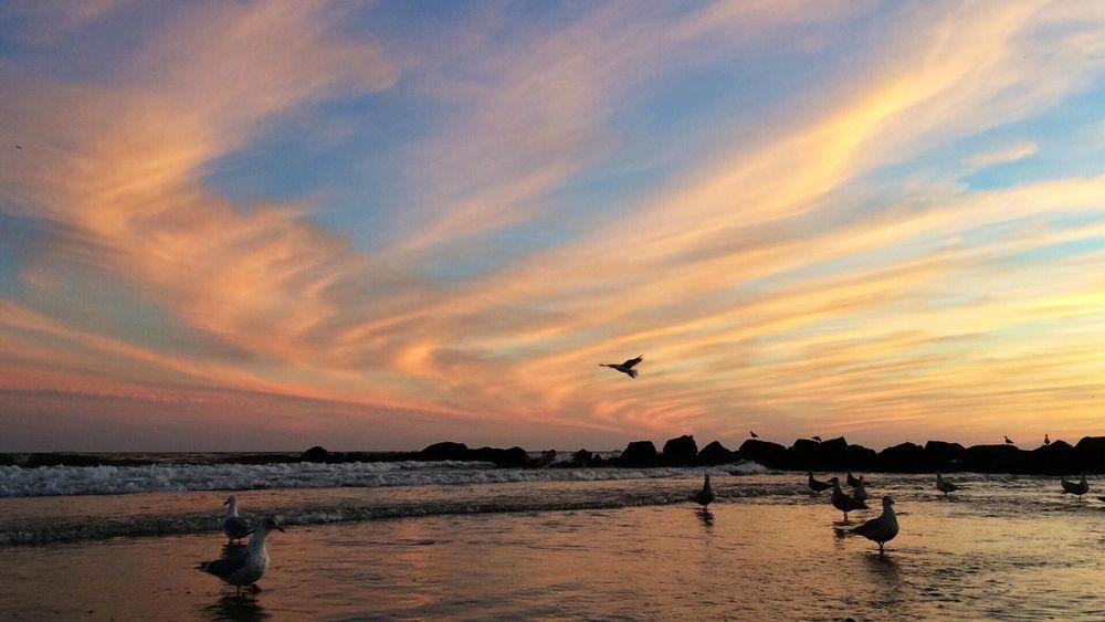 Sunset At Long Beach, NY EyeEm Sunset Visualmagic EyeEm Best Shots