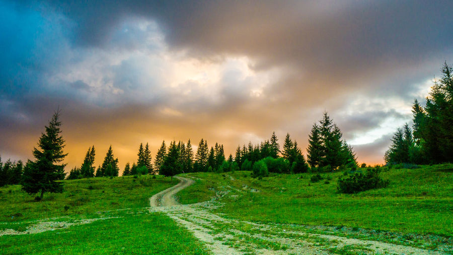 Outdoor moments Road to trees, road to sunset, road to colors and peace. Landscape Environment Land Nature Tree Cloud - Sky Sky Beauty In Nature Tranquil Scene Tranquility Scenics - Nature No People Road Non-urban Scene Grass Green Color Direction Transportation Growth Coniferous Tree Plant