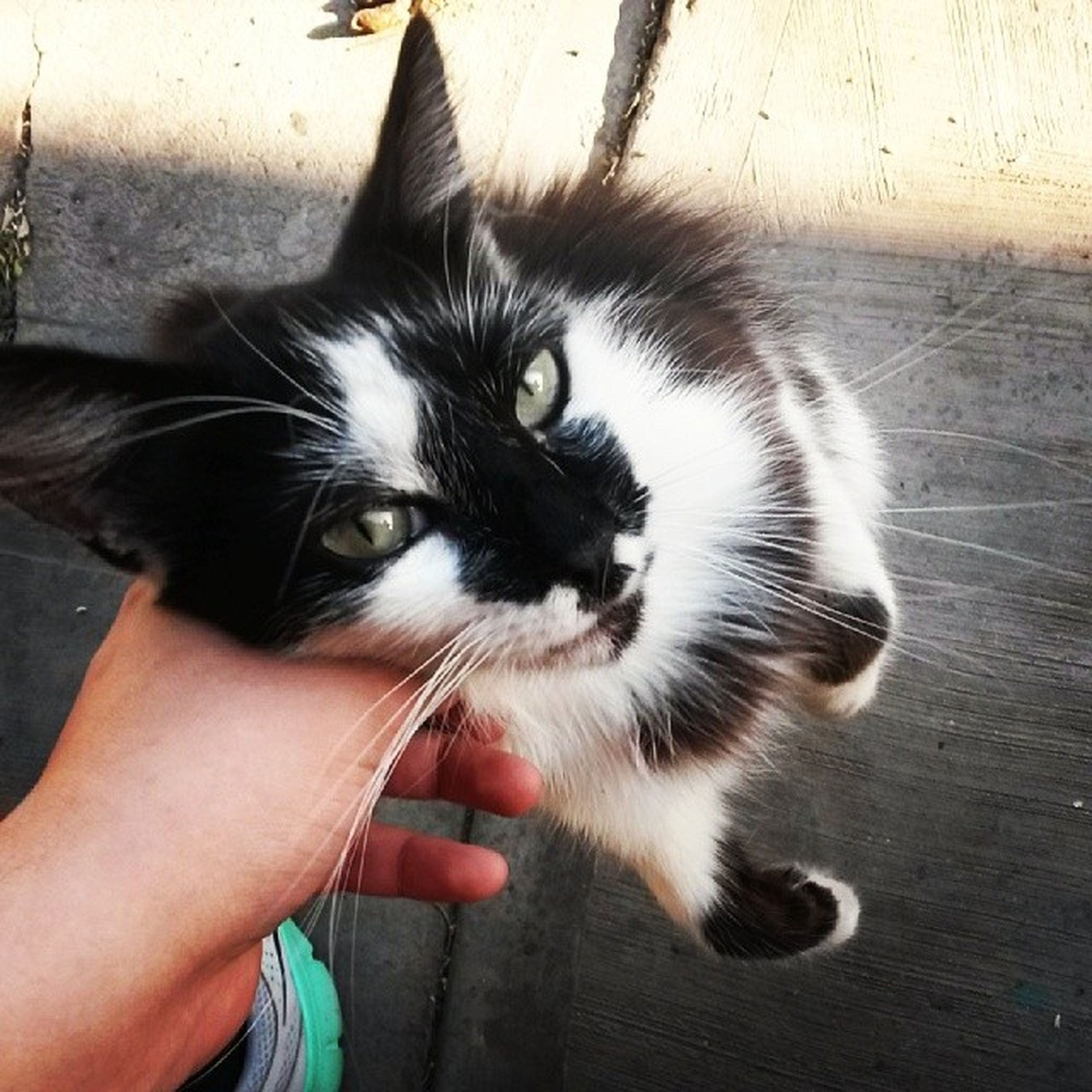 pets, domestic animals, one animal, animal themes, mammal, domestic cat, person, looking at camera, dog, portrait, pet owner, part of, lifestyles, whisker, unrecognizable person, cat, holding