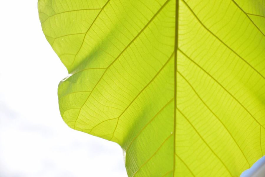 Leaf Green Color Low Angle View Close-up Nature Day Outdoors No People Beauty In Nature Freshness