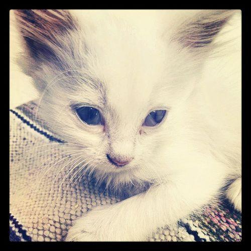 ALL U need is a Cat 9tatess Mo5nena Instacats lovemycat