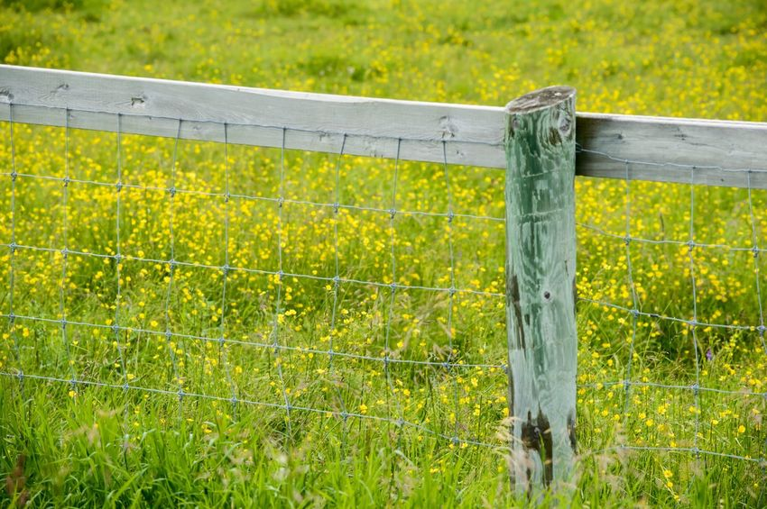Fence post in field of yellow flowers Nature Post Derelict Fence Wood Backgrounds Yellow Flowers Field Field Of Flowers Green Color Grass Field No People Nature Wood - Material Day Outdoors Close-up