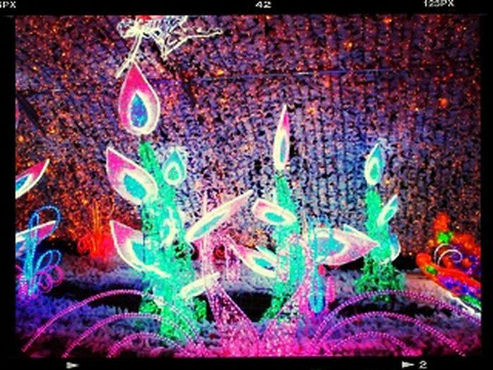 Autumn In Gotemba Irumination