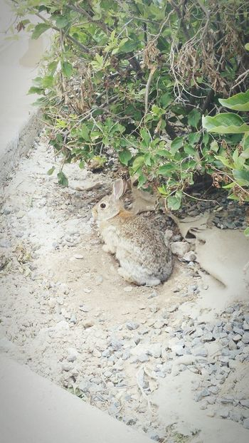 Beautiful rabbit. Day Growth Nature Outdoors Sand No People Tree Close-up Rabbit Brown Rabbit Animal Beauty In Nature Landscape Plant EyeEmNewHere Grass Clear Sky