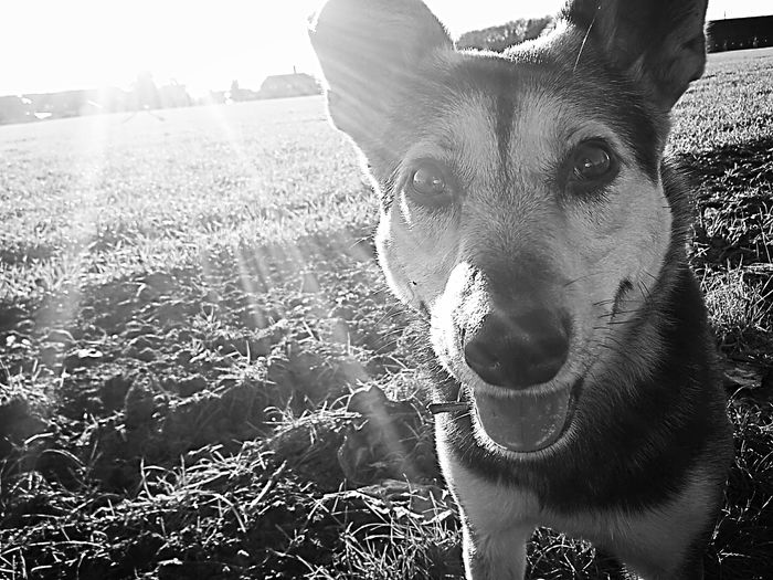 Sunkissed Blackandwhite Dog❤