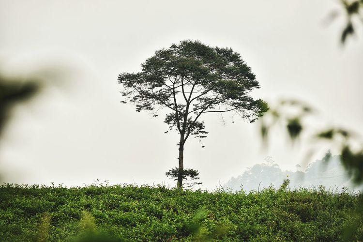 tree in centre