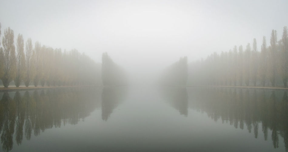 Reflection of trees on water in foggy weather