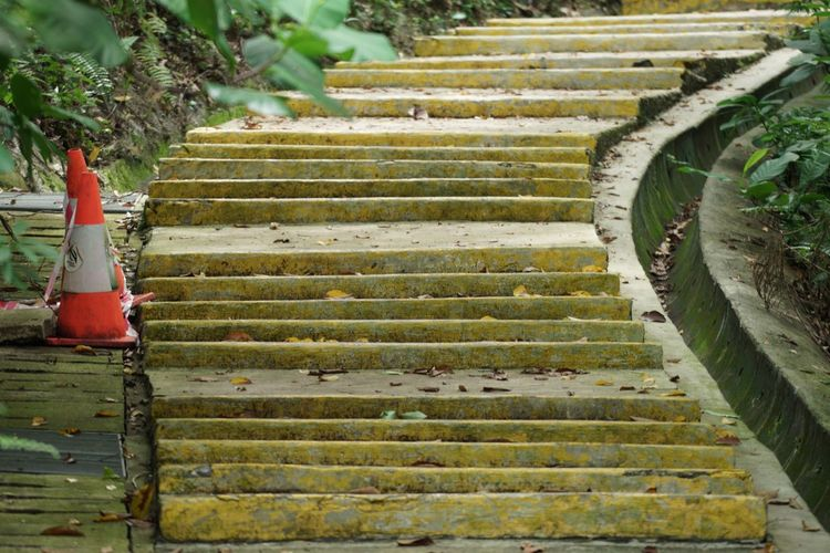 Yellow steps Steps Green Color Growth Plant Outdoors Nature Day Leaf Agriculture No People Tree Beauty In Nature