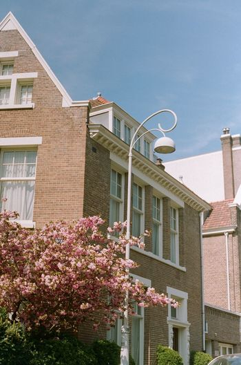 Low angle view of pink flowering plants by building against sky