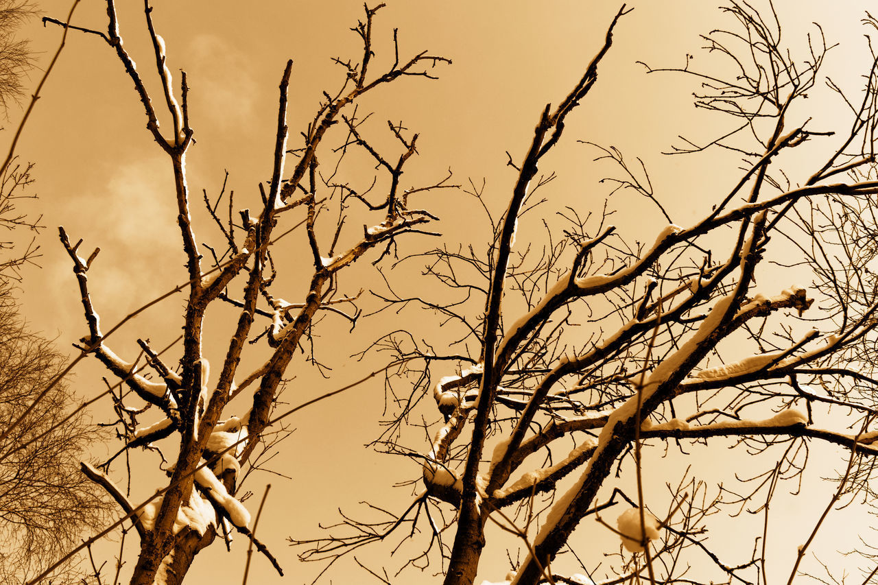 LOW ANGLE VIEW OF BIRDS PERCHING ON BARE TREE