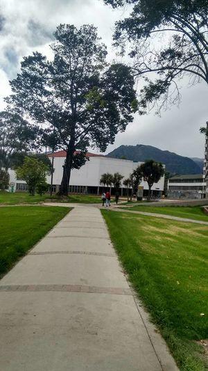 Universidad University Campus University Arboles Arboles Nature Arboles , Naturaleza Universidad Nacional De Colombia UniversidadNacionaldeColombia