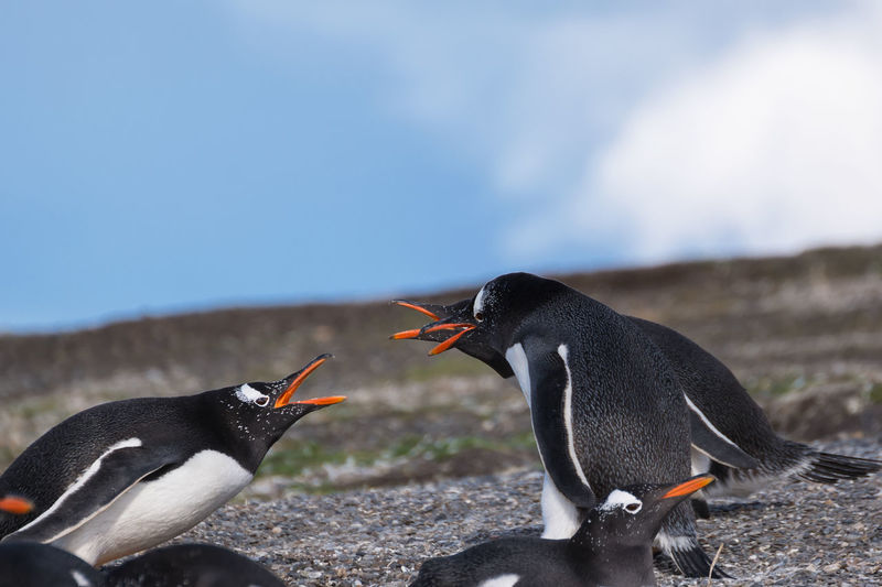 High angle view of penguins on shore