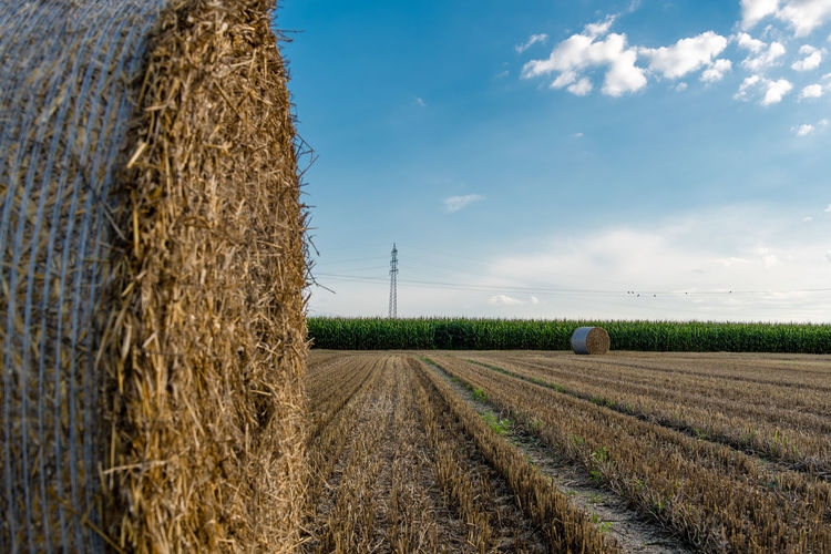 Agriculture Bale  Beauty In Nature Cereal Plant Cloud - Sky Combine Harvester Crop  Day Farm Field Growth Harvesting Hay Hay Bale Haystack Landscape Nature No People Outdoors Rural Scene Scenics Sky Tranquil Scene Tranquility Wheat