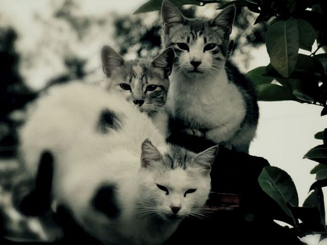 Cats Shades Of Grey Natura Urbana. Rayning Day