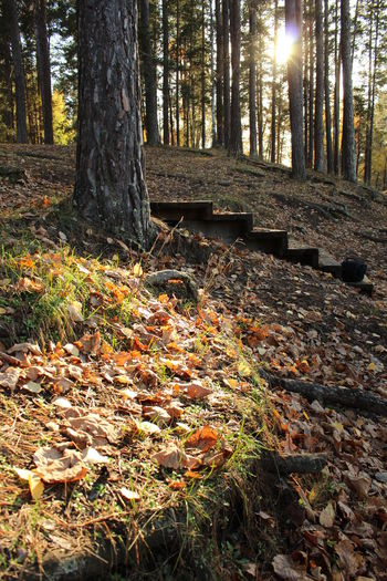 Beauty In Nature Autumn Forest Tree Trunk Nature Tree No People Russia Beauty Canon600D