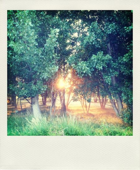 It has been since forever that l can understand sunset's language. Project365 IPhoneography Polamatic Starmatic Family *235/365*