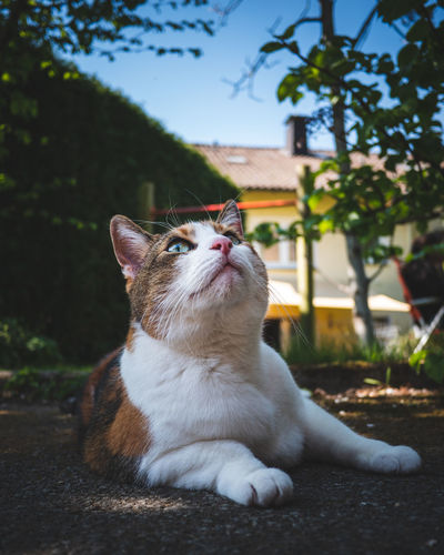 Cat sitting on a looking away