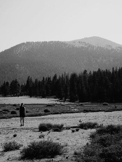 Starting an Adventure - Horseshoe Meadow (John Muir Trail) Spruce Tree Hiker Pine Woodland Full Length Silhouette Tree Inyo National Forest Adventure John Muir Trail Mountain View Hikingadventures Hiking Black & White Blackandwhite Wilderness Area Wilderness