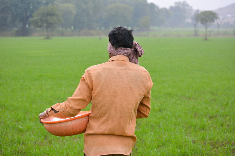 Indian farmer spreading fertilizer in the wheat field