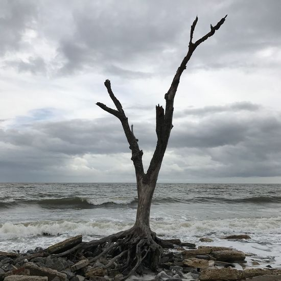 Sky Sea Lone Branch Nature Tree Trunk Horizon Over Water Bare Tree Tree No People Storm Beach Clouds Storm Clouds Solemn Sad Scenics Outdoors Day Dead Tree EyeEmNewHere