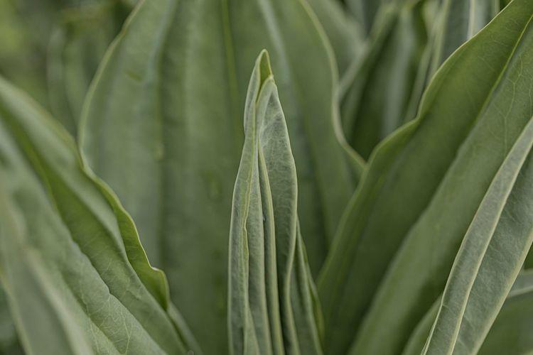Alpine flower,