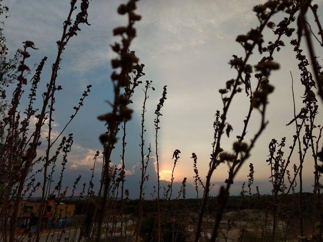 atardecer Sunset Landscape Sky