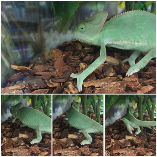 Wildlife Wednesday Wildlife & Nature Lizard Watching Sequential Photography Timelapsephotography Collage