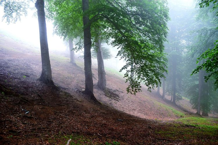 Tree Art Jungle Misty Morning Green Leaves Nature Photography Wildlife & Nature Trees Jungle & Mountain Feeling Alive