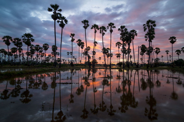 palm trees on beautiful sunset background Cloud - Sky Tree Water Sky Reflection Plant Palm Tree Nature Tropical Climate Beauty In Nature Sunset Tranquility Lake Scenics - Nature No People Dusk Tranquil Scene Waterfront Symmetry Outdoors Coconut Palm Tree Reflection Lake