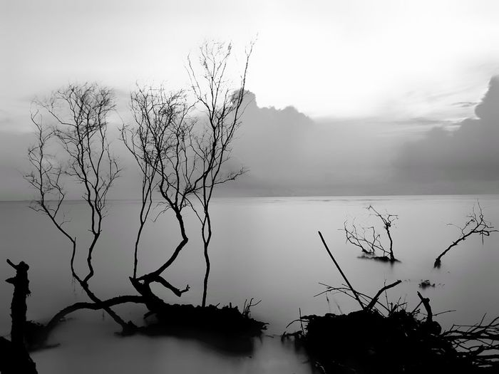 It's about white and black Water Tree Lake Reflection Nature Accidents And Disasters Landscape Plant No People Scenics Branch Beauty In Nature Fog Cloud - Sky Extreme Weather Outdoors Day Mountain Ice Sky First Eyeem Photo