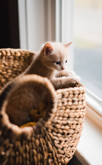 Cat relaxing in basket at home