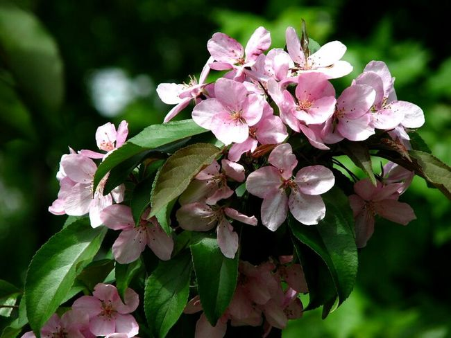 Flower Pink Color Nature Plant No People Canon EyeEm Canonphoto Sky Day Photography Canon Canonphoto Nature City Photographic Memory Photographer Photo Foto Springtime