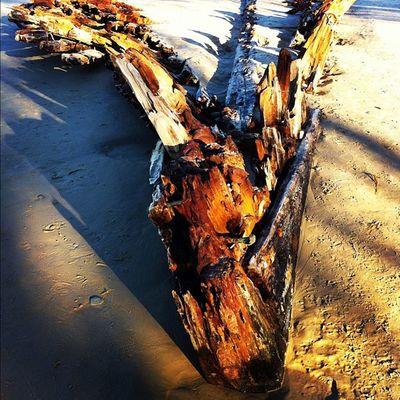 Shipwreck Ocean Buster Backtoearth woolgoolga