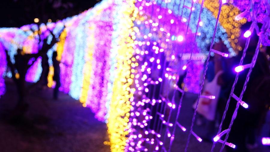 Multi Colored Purple Illuminated Night Hanging No People Flower Outdoors Close-up Nature Bokeh