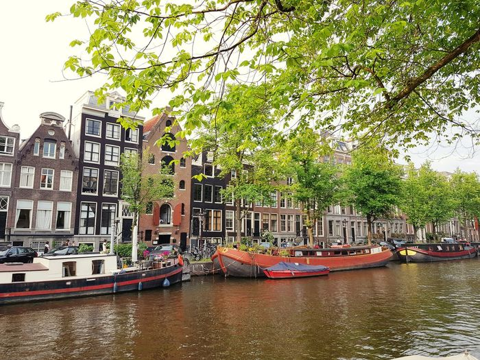 Amsterdam Canal Amsterdam Houses Dutch Houses Canal Netherlands Houseboat Boat Living On Water Tree Water Nautical Vessel Moored City Boat Architecture Building Exterior Built Structure Sky