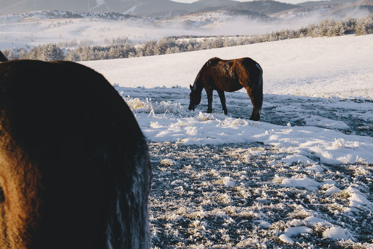 Horses On Snow Covered Field During Sunset