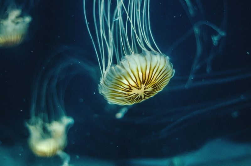EyeEm Selects Underwater Sea Life Jellyfish Swimming Water Animals In The Wild UnderSea Animal Wildlife Smooth Animal Themes One Animal Sea Close-up Floating In Water Nature No People Thick Day Photography Perspectives On Nature