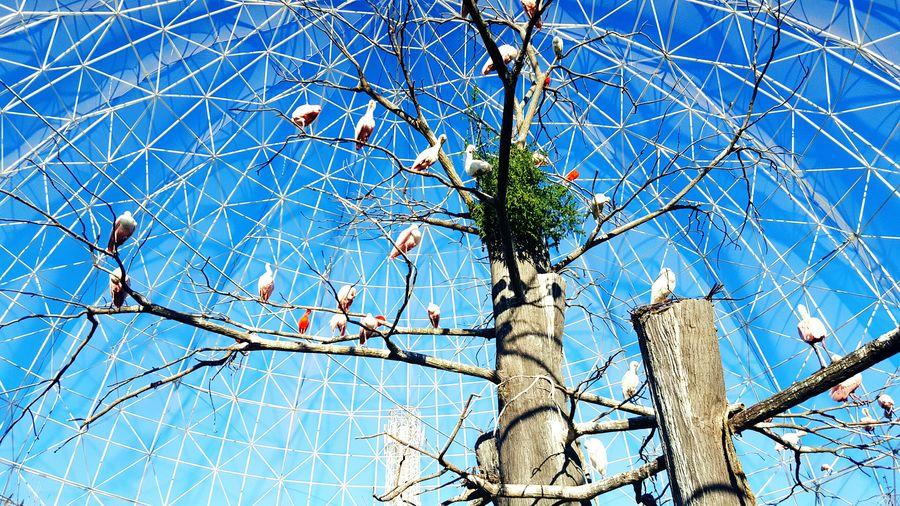 Oceanographic Valencianature BirdiesShots Birds Of EyeEm  Birds_n_branches