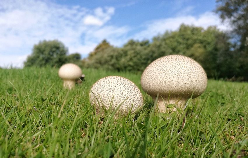 Mushroom Mushrooms 🍄🍄 Low Angle View Sky Grass Green Fungus Close-up Ground Level View Outdoors No People Day Nature