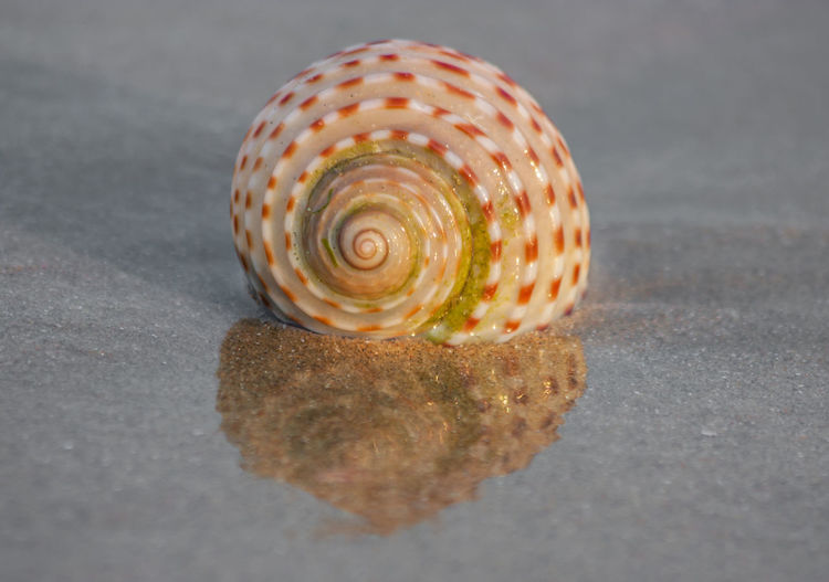 Close-up of seashell on a table