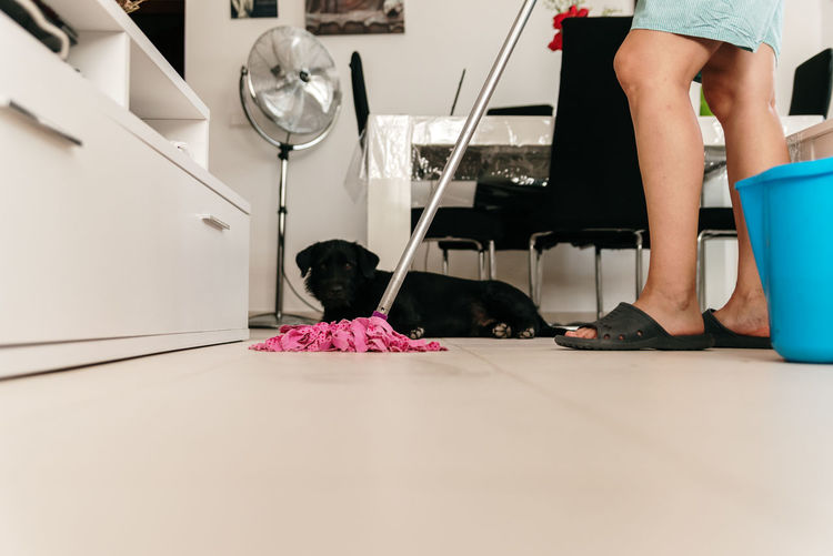 Low section of woman with dog on floor