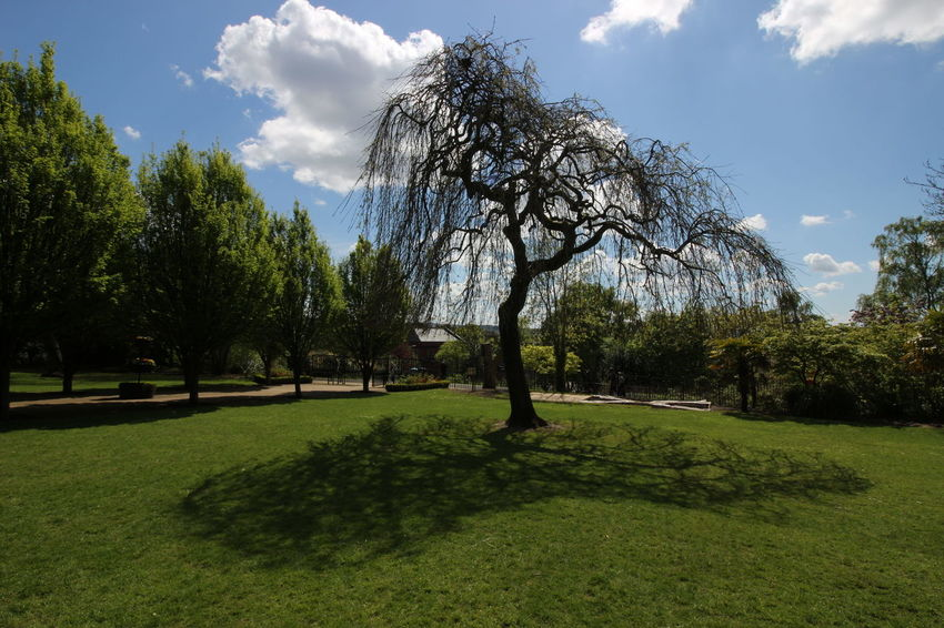Tree Shadow Sky Grass Landscape Green Color Cloud - Sky Blooming Plant Life Garden Path Growing Botanical Garden In Bloom Park - Man Made Space Young Plant